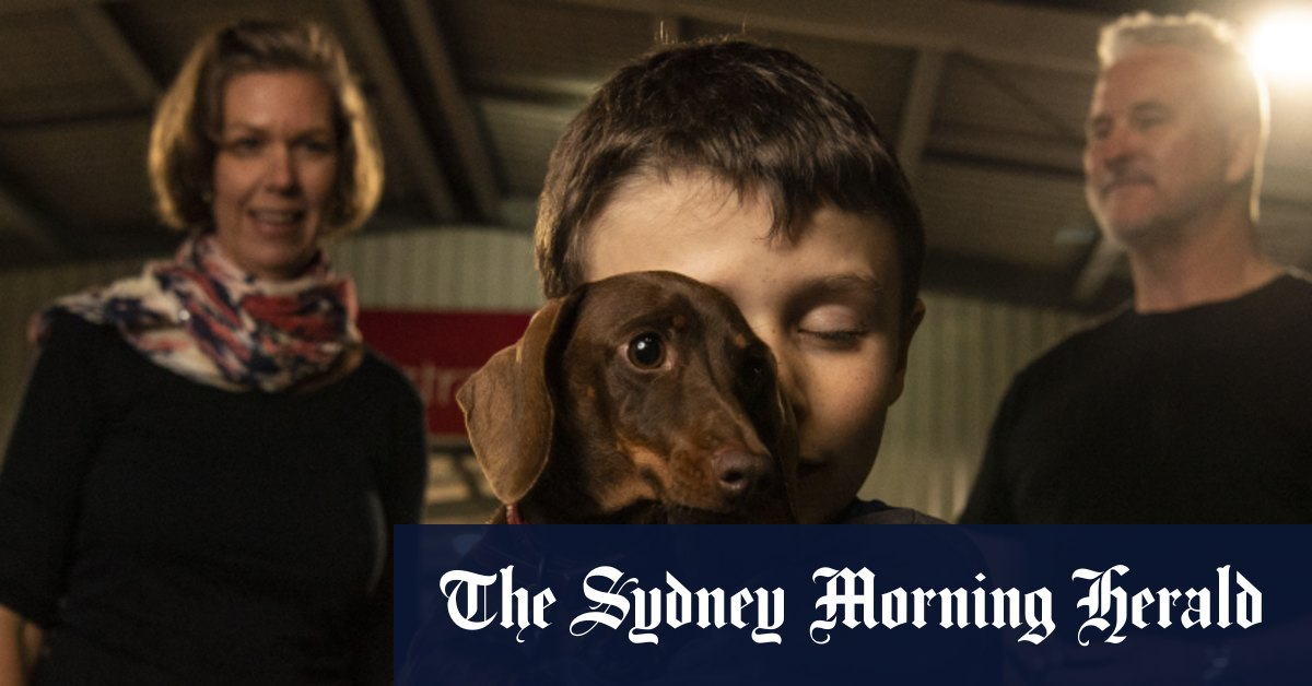 'Can't believe I have got her back': Dachshund Pip reunited with family in Sydney – Sydney Morning Herald