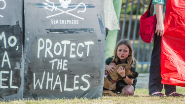 A  protest against the whaling decision outside the Japanese embassy in Canberra.