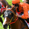 Fields of gold on the horizon for Logan's Villiers runner