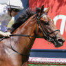 Champagne finish: Loving Gaby is favourite for the final leg of the two-year-old triple crown, the Champagne Stakes at Randwick on Saturday.