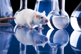 The Animal Resources Centre provides rats and mice for researchers across the country.