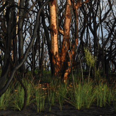 After fires ripped through Crowdy Bay National Park in November last year, there are signs of recovery.
