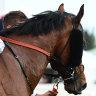 Early autumn on radar for future stallion Super Seth