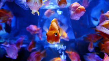 Smart devices, including remotely monitored fish tanks, could be less secure than people think.
