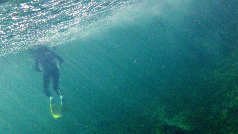 There were 49 deaths in recreational snorkelling workplaces in Queensland from 2000-2011.