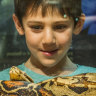 Reptiles feel the love at the Botanic Gardens' latest scaly exhibition