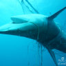 'We fear the very dramatic thing': Shark nets found to be ineffective