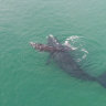 Scientists spot rare whales in Jervis Bay