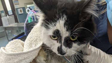 The RSPCA is appealing for the public's help to track down the person responsible for an illegal steel trap after it left a pet cat severely injured last month.