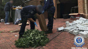 Nine hydroponic operations were discovered in rented residential houses across Sydney.