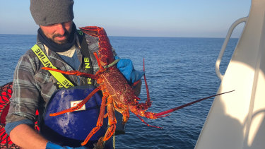 Fisherman and San Remo Co-op member Johnathon Brocklesby catching crays two weeks ago.