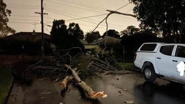 One Nunawading resident had a tree fall in their court on Thursday,
