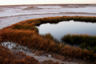 A mound spring near the shore of Lake Eyre in South Australia.