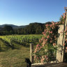 'I'm just trying to keep my cool': Horror start to 2019 vintage for West Gippsland wineries