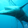 Shark summit calls for an end to shark nets and drum lines