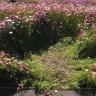 'Selfish selfie' visitors trample botanic garden's 'perfect' daisies