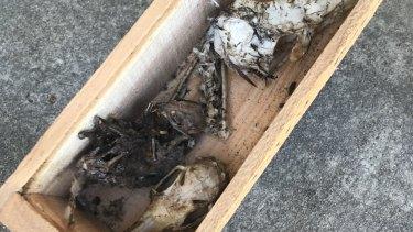 Animal skulls were seized during the raids.