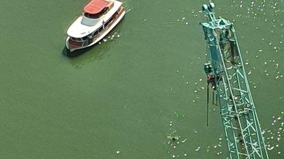 Swimmer beats the heat in Brisbane River as heatwave drags on