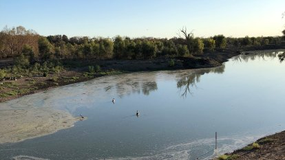 Two million fish to be released into Murray-Darling system