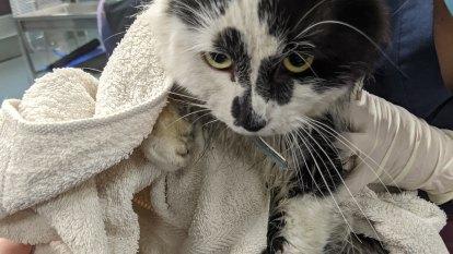 'Horrific act of animal cruelty': Pet cat loses leg in illegal trap