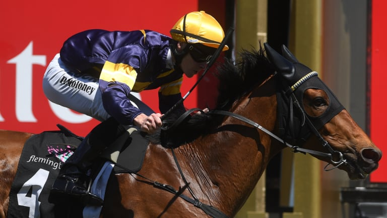 No emergency: Jockey Patrick Moloney and Vengeur Masque, which has missed a spot in the Melbourne Cup field the last two years.