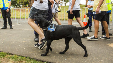 Drug detection dogs will be in force at the concert on Saturday night.