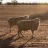 Australia posts hottest January-June for days as big dry rolls on