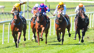 Heading south: Queensland mare Final Zero will tackle the 2019 Membership Handicap at Randwick on Saturday.