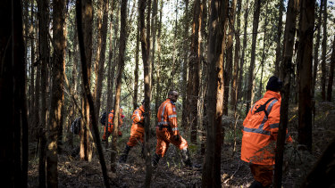 Police and SES searching for Will in the forest surrounding Mt Disappointment on Tuesday.