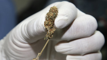 A police officer in Bangkok shows buds of marijuana at a news conference earlier this month.