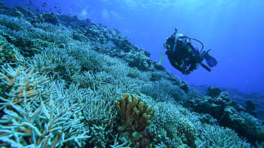Dr James Gilmour monitoring Rowley Shoals, a group of atoll-like coral reefs south of the Timor Sea.