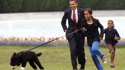 Bo, the former 'first dog' of the Obamas, dies