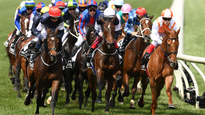 A Melbourne Cup that's full to the brim: Your horse by horse guide