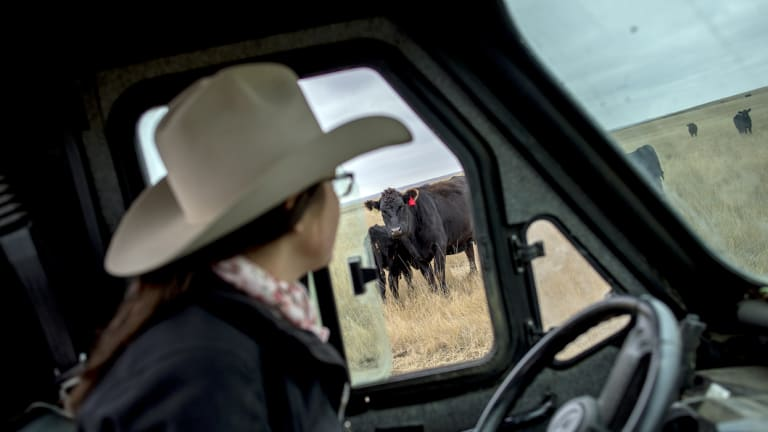 Kelsey Ducheneaux, a member of the Lakota Nation, checks on cattle on the Cheyenne River Indian Reservation, in South Dakota.