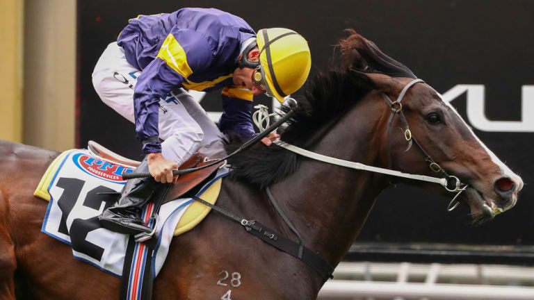 Grunt salutes at Flemington with Damian Oliver on board.