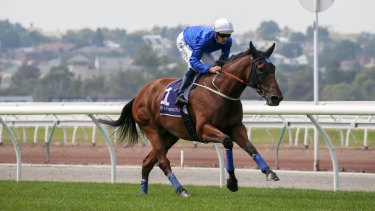 All-Star Mile favourite Alizee. But then there are the bargain entries.