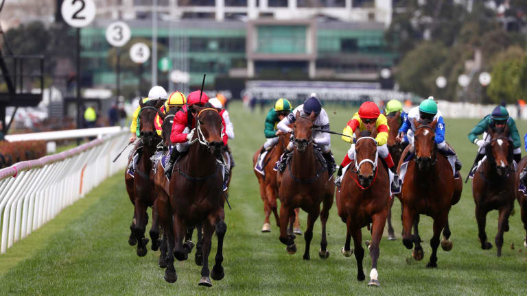 Leader of the pack: Brenton Advulla (first left) out front on Smart Melody the Cap D'Antibes at Flemington.