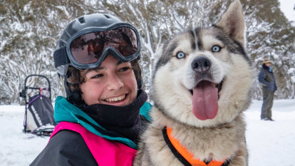 'It's about having fun': Dinner Plain dog sledders lap up snow cover