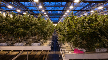 Canada, which has allowed medical marijuana for almost two decades, legalises the drug for recreational use.