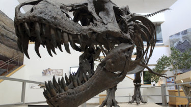 The debate over fossil sales has grown more heated now that dinosaur relics have become trophies,