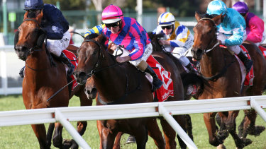 Flying machine: Tony Nicconi wins the Vain Stakes at Caulfield last year.