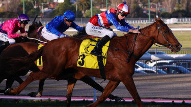 Oldie a goodie: Nine-year-old Magic Consul sweeps around the field to win at Moonee Valley.