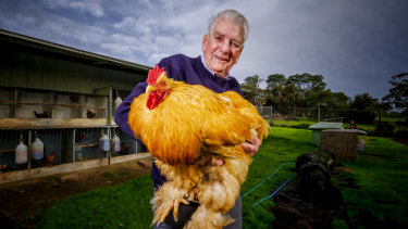Alf Woods at his Greenvale property with a 12kg buff cochin rooster.