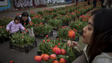 Over 150,000 tulips lined the Yarra River as spring arrived in Melbourne.