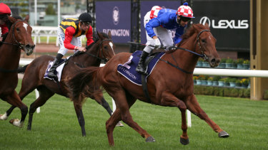 Racing home: Brett Prebble rides Moldova to victory in race one, the Jack Styring Plate, during the Living Legends Raceday at Flemington on Saturday.