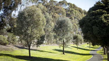 Mature trees in Bulleen's Estelle Street, planted when the Eastern Freeway was built in 1982, are among 26,000 to be cut down to widen the road and build the North East Link.
