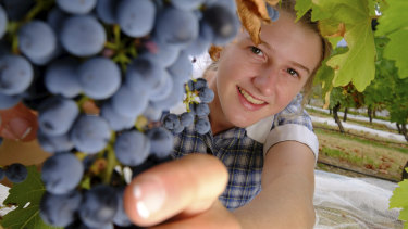 Having a grape time: Year 12 student Abi van Bergeijk hopes to work in the wine industry.