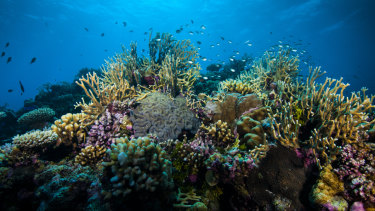The Morrison government has abandoned a $10 million pubic relations campaign to raise hopes about the future of the reef.