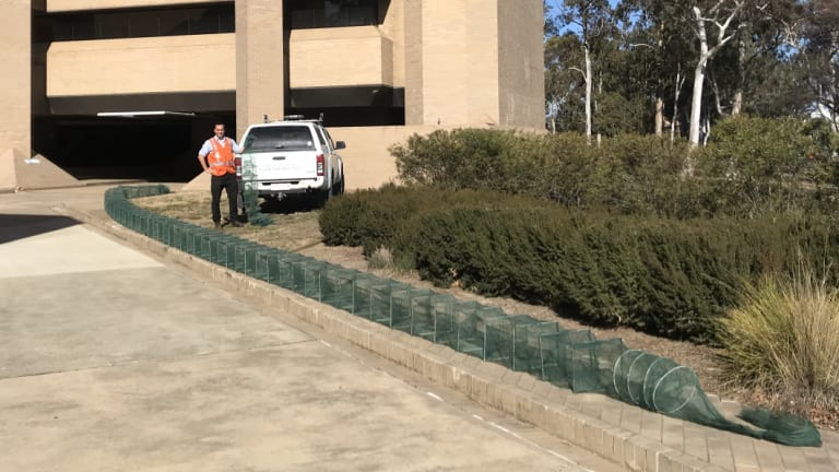 Access Canberra environment protection officer Patrick Bacon with a 25-metre net pulled from Franklin Pond in Gungahlin.