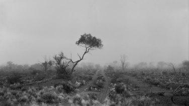 Paul Ogier: <i>One Tree</i>, carbon pigment on rag paper, 94 x 117cm, 2010. Copyright: the artist.